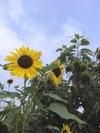 2008_8_9_1